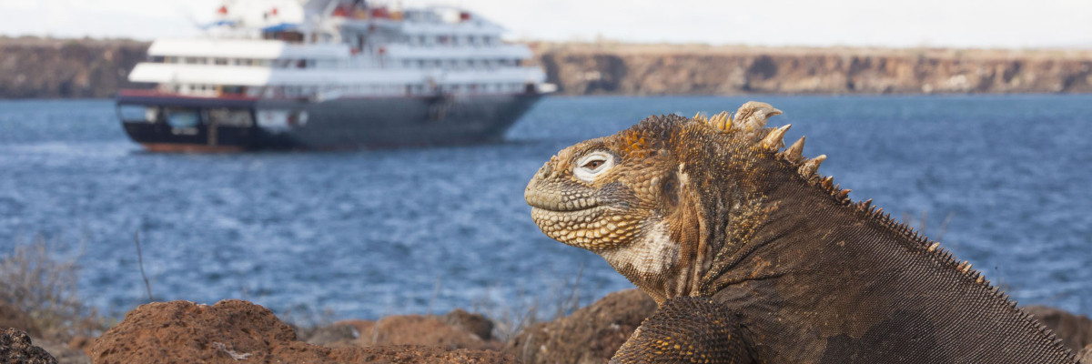 Marine Iguana with Silver Galapagos ship in background